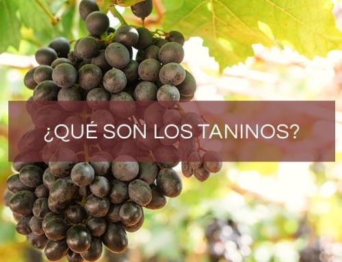 ¿Qué son los taninos del vino?